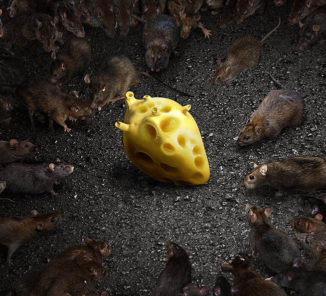 Ratas-megaclose.jpg